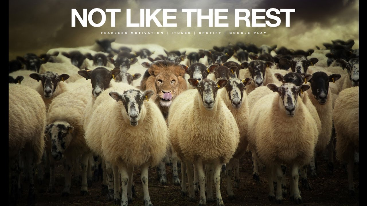 Not-Like-The-Rest-Motivational-Video-The-Champion-Mindset